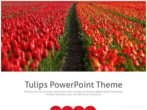 Tullips PPT Background - 10+ Floral PowerPoint Backgrounds
