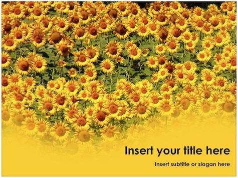 Sunflower PowerPoint Template - 10+ Floral PowerPoint Backgrounds
